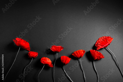 Cadres-photo bureau Poppy Red poppies on a dark background