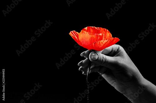 Canvas Prints Poppy Red poppies on a dark background