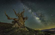 Bristlecone Pine Under Milky Way