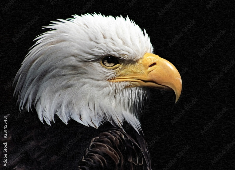 Bald Eagle heraldic animal of the United States of America