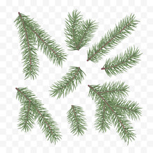 Green Fir Branches. Holiday Decor Element. Set Of A Christmas Tree Branches. Conifer Branch Symbol Of Christmas And New Year. Vector Illustration Isolated On White Background