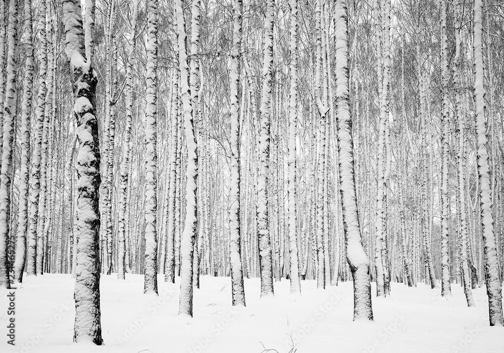 Winter snowy birch forest