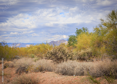 Spoed Foto op Canvas Honing Landscape photography of the peacefulness of the Sonoran desert near Phoenix, Az along with cactus and bright clean air
