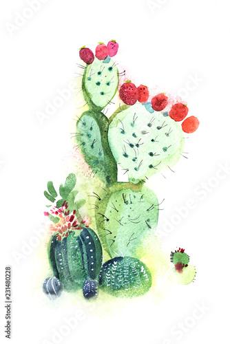 akwarela-recznie-rysowane-kolczaste-kaktus-kwiat