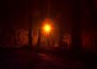 light in the night park