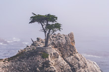 The Lone Cypress, Monterey, Ca...