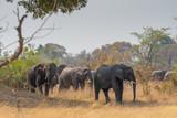 eine Herde Elefanten im Mudumu Nationalpark, Namibia