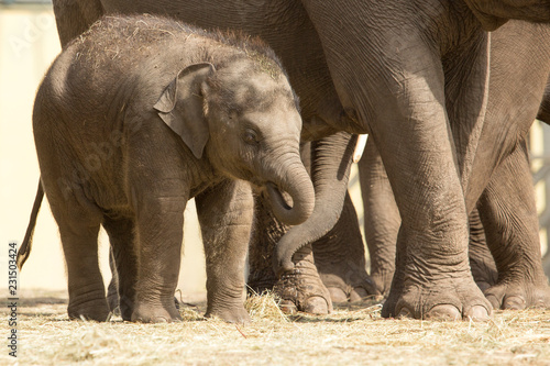 Poster Elephant Aziatische baby olifant - heerlijk zonnetje