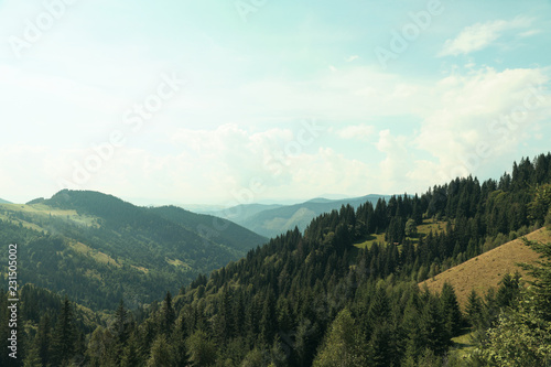 Foto op Aluminium Wit Beautiful landscape with forest and mountain slopes