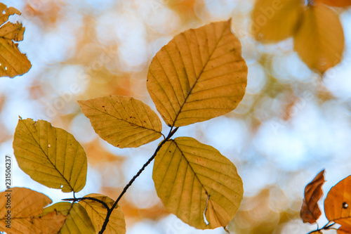 La pose en embrasure Jaune autumn leaves on blue sky background