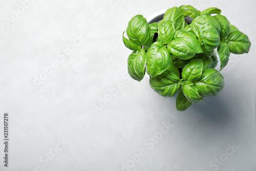 Fresh basil in pot on light background, top view with space for text