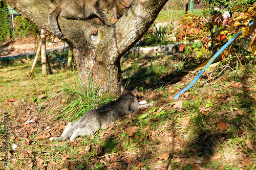 Keuken foto achterwand Bomen cat climbs the tree and exposed claw