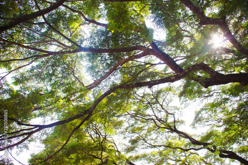 tree with green leaves #231508865