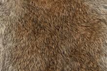Macro Close Up Of Rabbit Fur