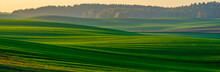 Panorama Of A Green Field In A...