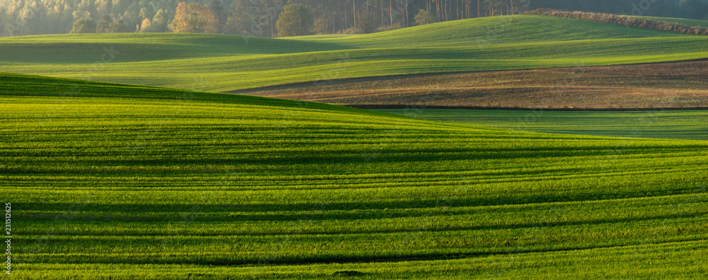 Fototapety, obrazy: panorama of a green field in autumn scenery