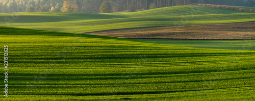 Foto op Plexiglas Weide, Moeras panorama of a green field in autumn scenery