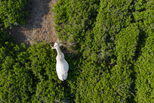 Aerial View Of A Beautiful Whi...