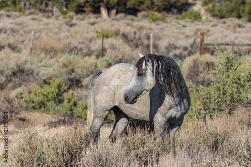 Photo  Wild Horse in the Colorado High Desert in Summer