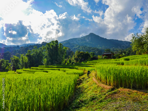 Foto auf Leinwand Reisfelder The step rice field in north of Thailand
