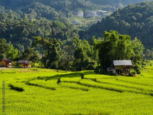 Poster Rijstvelden The step rice field in north of Thailand