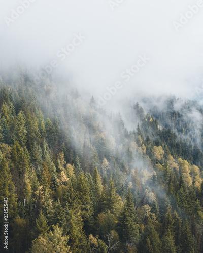 Foto op Canvas Bergen Misty forest seen from above
