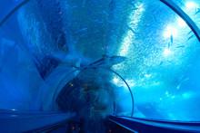 水族館のトンネル