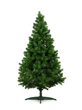 Real Christmas Tree, Isolated On White Background.