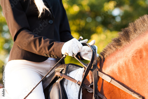 Slika na platnu Rider's hand close-up holds horse halter,leather covered chain lead