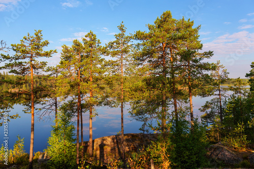 Foto op Canvas Bomen pine trees on a forest lake