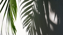 Tropical Palm Leaves With Shadows On White Concrete Wall Abstract Blurred Background.