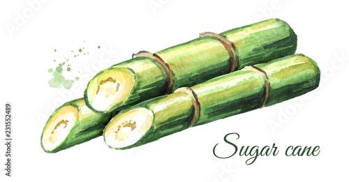 Fototapeta Sugar cane composition