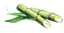 Sugar Cane With Leaves. Waterc...