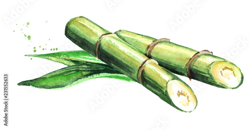 Sugar cane with leaves Fototapet