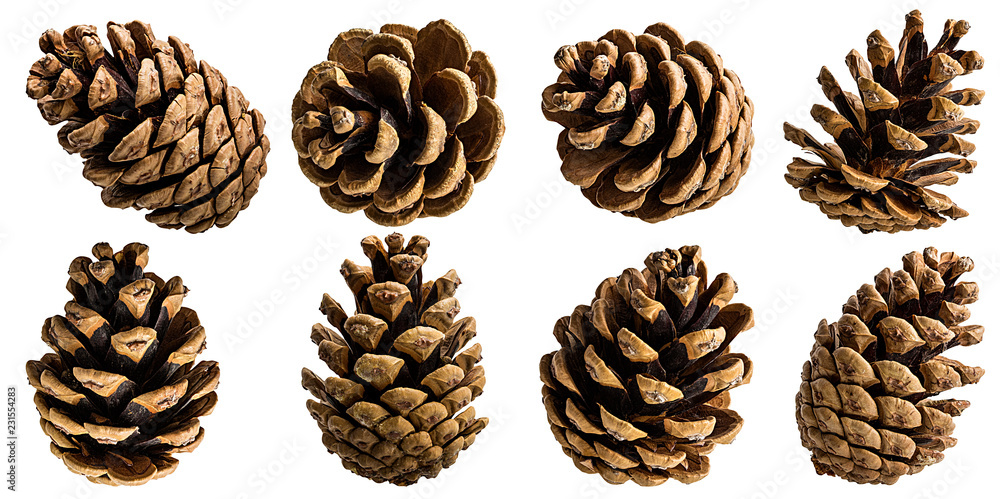 Fototapety, obrazy: Brown pine cone on white background with clipping pass