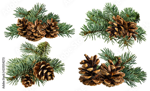 Fotomural Green fir branch with cone on white background with clipping pass