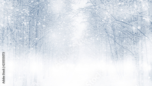 Autocollant pour porte Bosquet de bouleaux Winter background with snowy trees in the forest