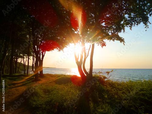 Fototapeta Baum Silhouette am Meer bei Sonnenuntergang obraz na płótnie