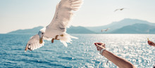 Woman Traveling On Ferryboat A...