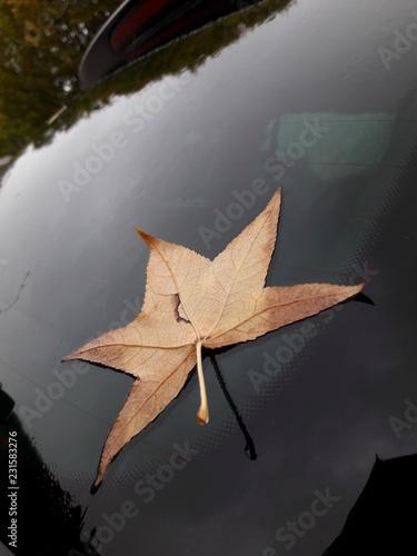 Fényképezés  Foglia di un albero su un'auto in autunno