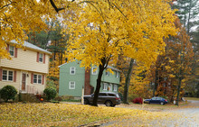 Autumn Yellow Trees And Houses In Residential Area