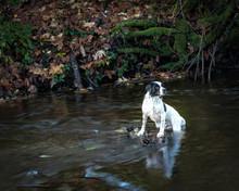Dog In Johns Creek