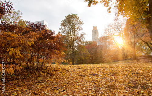 Tuinposter Amerikaanse Plekken Central Park during fall season, New York