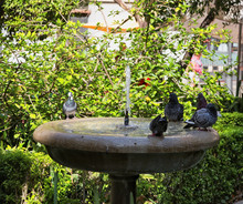 Pigeons Sit On A Stone Bowl Of A Drinking Fountain In The City