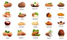 Nut Icon Set. Cartoon Set Of N...