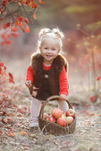 Child Picking Apples In Autumn...
