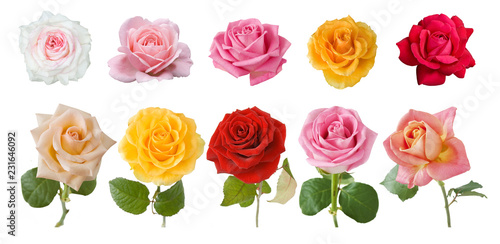beautiful roses bunch