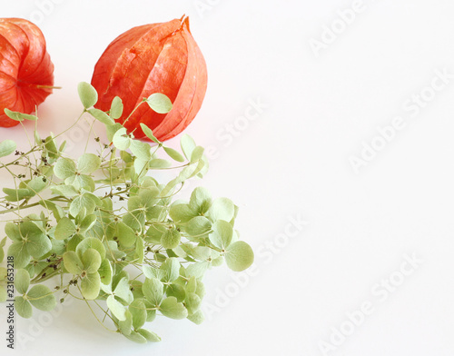 Photo  Romantic background with orange physalis and hydrangea isolated on a white background