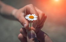 Hand Giving Wild Flower With Love At Sunset . Beautiful Background