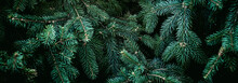 Christmas Fir Tree Branches Ba...